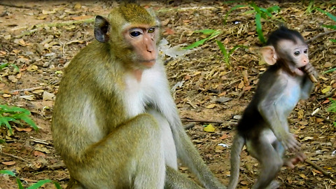 The Baby Monkey Standing Looking For Mother