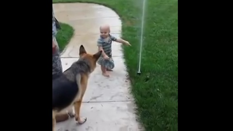 Hillarious.!! Toddler Helps German Shepherd Fear Of New Sprinkler
