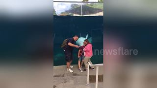 Beluga whale photobombs family - Video