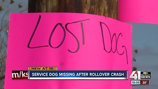 Smithville family searches for missing service dog - Video