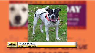 Meet Maize: Pet of the Week 5/13/2020