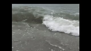 Shark Seen Swimming Within Meters of Shore at North Myrtle Beach