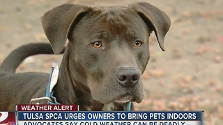SPCA urges pet owners to bring animals inside