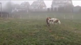 Adorable miniature horse gets a fright from carrots