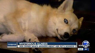 Lone Tree dog owner says her pup has come down with a mysterious illness