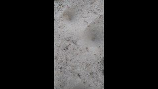 Startling moment an ant lion ambushes and drags ant under the sand - Video