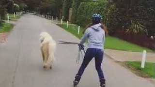 Horse Takes His Owner For a Ride - Video