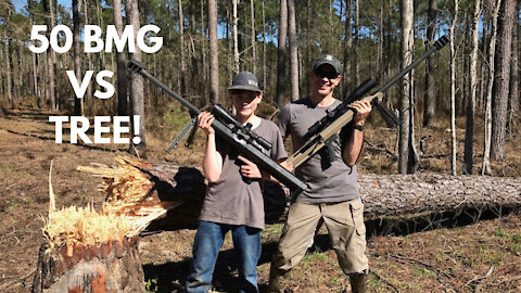Shooting Down a Tree with 50BMG!!!