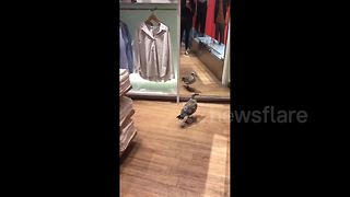 Seagull goes shopping in London - Video
