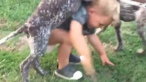 Toddler and puppies adorably play together
