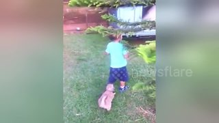 Puppy won't let go of boy's trousers - Video