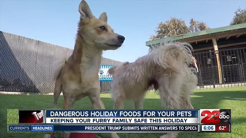 Holiday foods that are dangerous for your pets