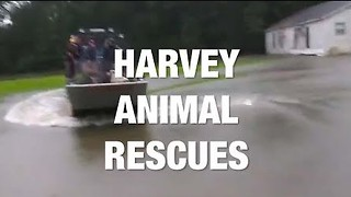 Animals Rescued During Harvey Floods - Video