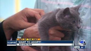 Denver7 pet of the day for June 18th - Video