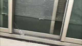 Man Arrives Home to Flooded Apartment After Dog Runs Faucet - Video