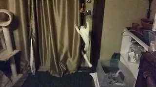 Jumping Kitten Suffers Unfortunate Landing - Video