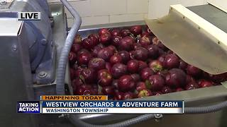 Westview Orchids in Romeo - Video