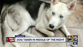 Dog taken from yard in the middle of the night - Video