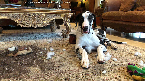 Great Dane Puppy Dumps Plant and Dirt on the Rug