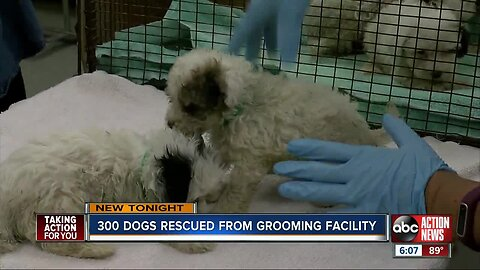 300 dogs seized from Tampa breeding facility