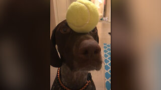 Testing your dog's patience
