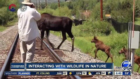 Reminders about interacting with Colorado wildlife