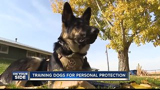 Protection dog training - Video