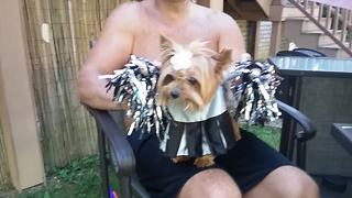 Funny Puppy Is The Cutest Cheerleader Ever