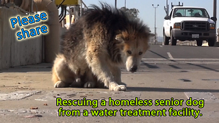 Rescuing a homeless senior dog from a water treatment facility - Video