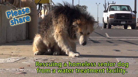 Rescuing a homeless senior dog from a water treatment facility
