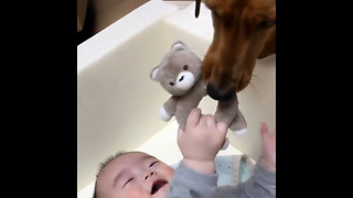 Dog steals baby's toy, baby find it hysterical