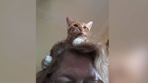 23 Cats Who Love Invading Personal Space
