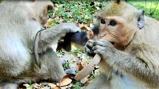 Young Monkey Always Careless With Her Own Baby - Video