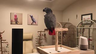 Parrot Asks Google Home A Question And Gets A Clear Answer - Video
