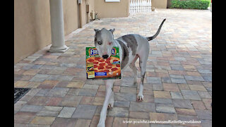 Deaf Great Dane delivers pizza by responding to sign language