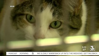 Fremont to end contract with controversial animal shelter