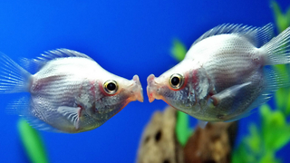 Valentine's Day Animals In Love - Video
