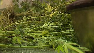 Two men facing charges after large marijuana bust on Detroit's east side - Video