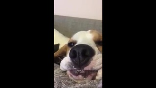 Dog begs for food in hilariously unique manner