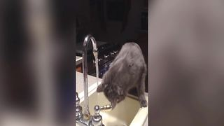 This Cat Loves Washing Her Face - Video