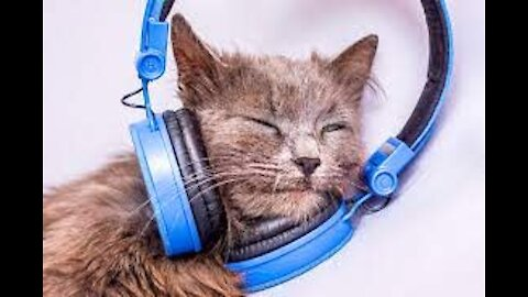 ANIMALS and POWER OF MUSIC🎵