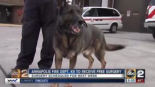 Vet offers to perform surgery on injured K9 for free - Video
