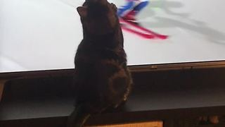 Sports-loving cat really gets into the Winter Olympics - Video