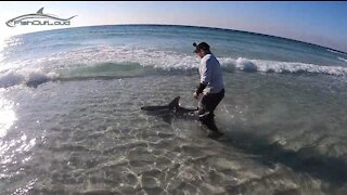 Fishing for Sharks from the beach