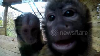 Curious monkey tries to lick camera - Video