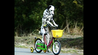 Dalmation Rides A Bike - Video