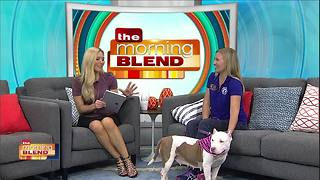 Gulf Coast Humane Society: Puppies for Days!