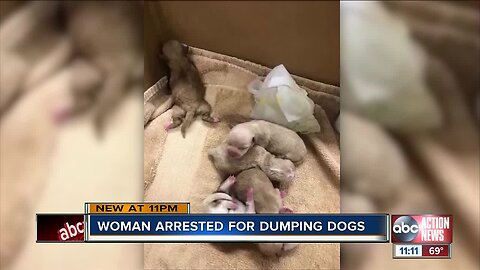 Woman arrested after puppies dumped in trash can at Coachella