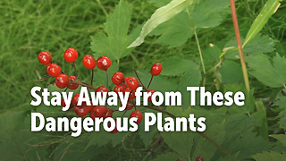 Stay Away from These Dangerous Plants - Video