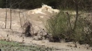 Duck River Rages Amid Heavy Rain in Tennessee - Video